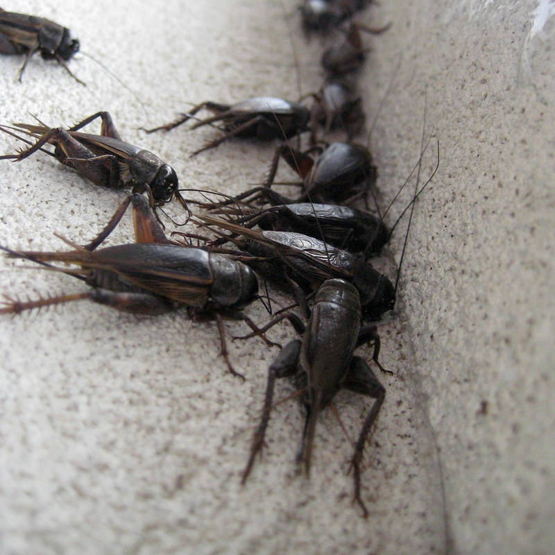 crickets on the steps of a home in yuma
