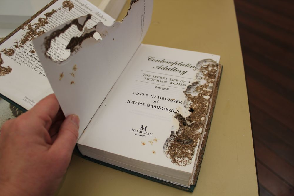 termites have eaten the pages of a book